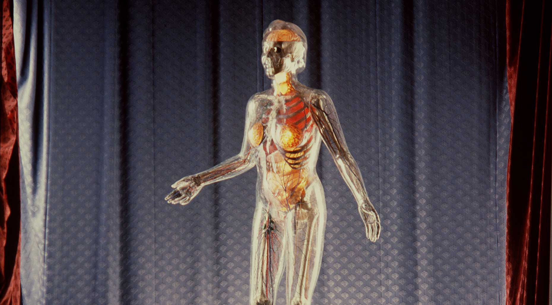 The Transparent Woman, 1950 to 1953, made by the German Health Museum, Germany, photographed by Geoff Friend. Powerhouse Collection.